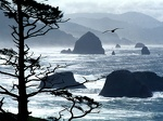 Ecola Point  Oregon Coast   1600x1200   ID 36769